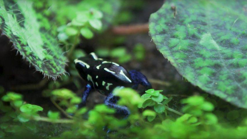 Más de 120 especies de fauna fluvial en el Acuario de Zaragoza